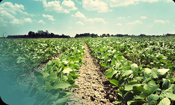 Ortopixel gestão drone na agricultura