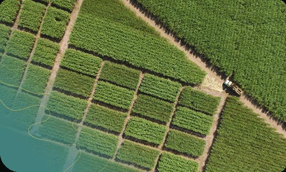 Ortopixel mapeamento drone na agricultura