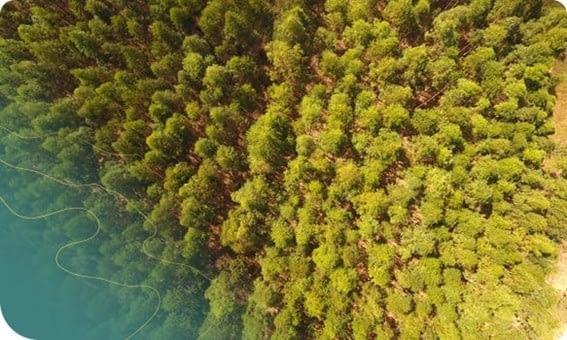 Monitoramento de áreas de conservação tem muito a ganhar com a inspeção com drone