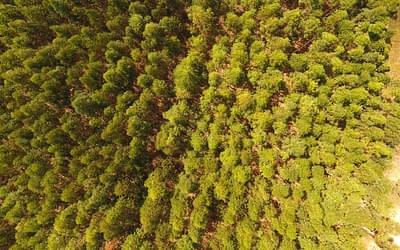 Os Drones irão salvar o planeta – plantando árvores!