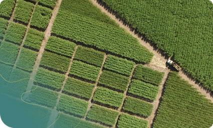 Na agricultura, inspeção com drone é cada vez mais utilizada