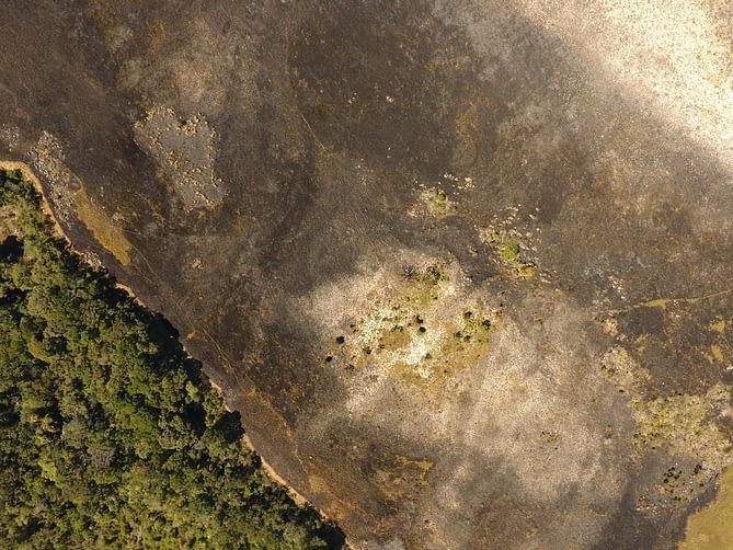 Imagem de vegetação capturada por drone